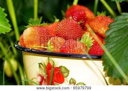 Berry Strawberry