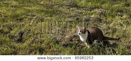 Cat Ready To Jump In The Ground
