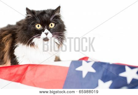 Cat With Flag Of United State