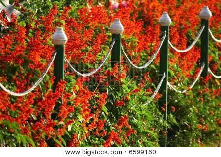 Red Flowers And Metal Fence