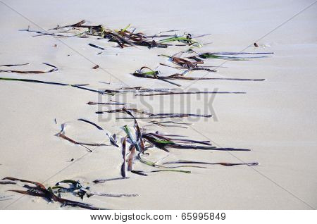 Seagrass Pattern On Sandy Beach