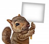 image of furry animal  - Squirrel holding a sign with realistic fur and paws as a friendly cute furry rodent character gripping billboard signage for advertising and marketing as a message from animal wildlife - JPG