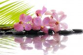 image of drow  - Still life with set of orchid on wet zen stones - JPG