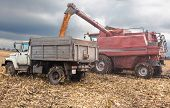 picture of maize  - machines for harvesting maize in autumn on a cloudy day - JPG