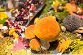foto of bolete  - Orange cap bolete in the window display - JPG