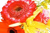 foto of tuberose  - red and orange gerbera  - JPG