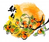 stock photo of mid autumn  - Vector Ink Painting of Persimmons for Mid Autumn Festival - JPG