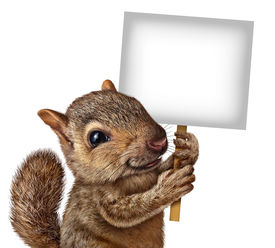 stock photo of furry animal  - Squirrel holding a sign with realistic fur and paws as a friendly cute furry rodent character gripping billboard signage for advertising and marketing as a message from animal wildlife - JPG