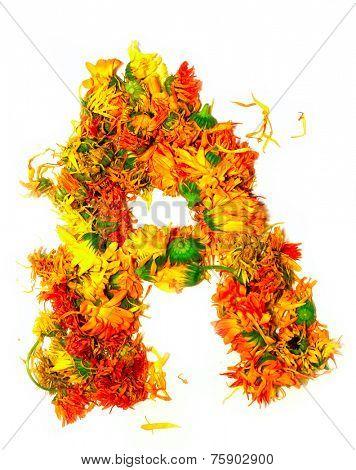 Initials letter A.