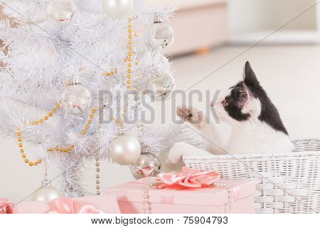 Cute little Little cat sitting with Christmas gifts and playing with Christmas tree ornaments
