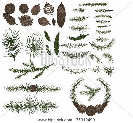 Various pine,spruce branches ,cones