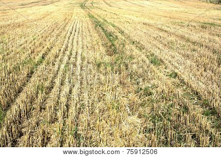 Harvested stubble fields