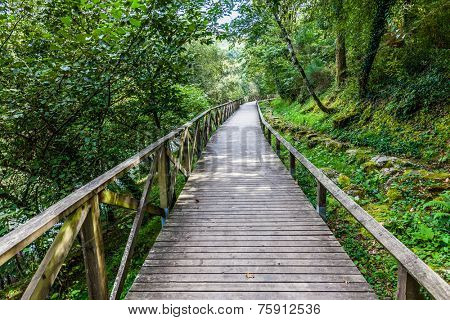 Hiking wooden passage or path through the luxurious forest near the Queimadela Dam in Fafe, Portugal