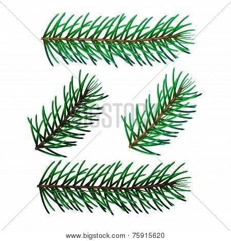 illustration of four spruce twigs