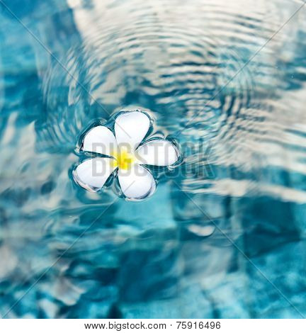 Single Peaceful Plumeria Flower Floating on Clear Rippling Water