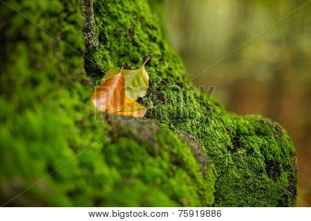 Intact moss and autumn leaves