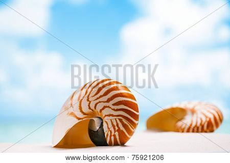 nautilus shell on white Florida beach sand under sun light, shallow dof