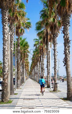Palm bicycle lane