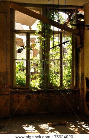 Old Window With Plants Grown