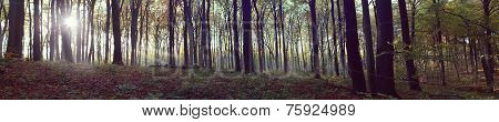 Panoramic view of foggy forest