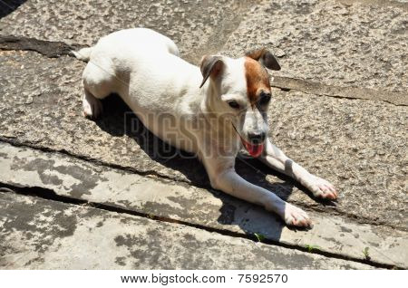 Flop Dog White Small