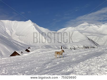 Dog On Ski Slope In Nice Day