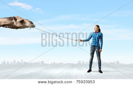 Young woman in casual holding camel on lead