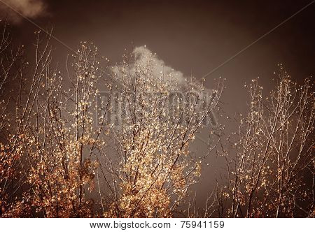 Overcast autumn weather, natural background with dry trees on gray sky, dramatic storm, grunge photo effect