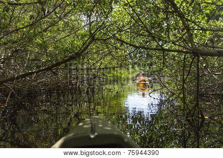 Kayaking In Everglades National Park, Florida, Usa