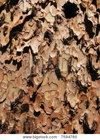 Ponderosa Pine Bark Close-up