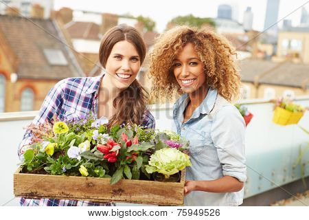 Two Women Holding Box Of Plants On Rooftop Garden