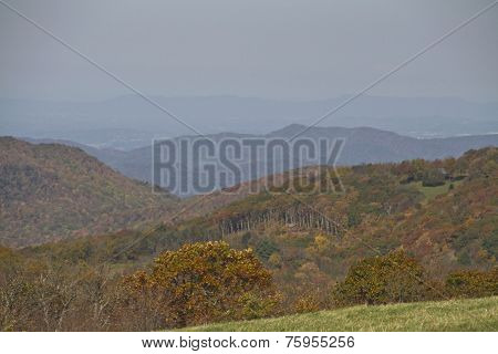 Appalachian Forest And Mountain Wilderness