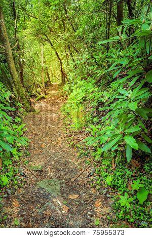 Sheltowee Trace trail near Cumberland River in Kentucky