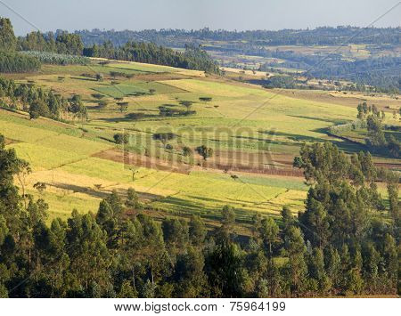 patchwork of farmland in Oromia, Ethiopia