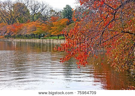 Cherry trees around the Tidal Basin in Washington DC in fall.