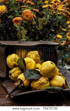 juicy, ripe quince fruit on wooden top