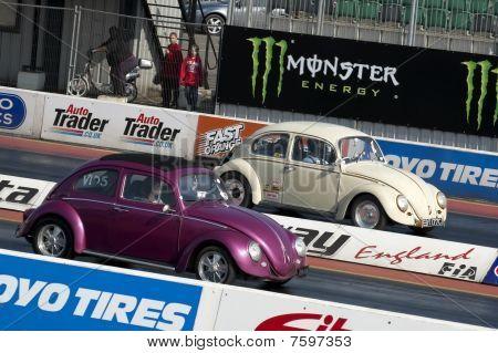 Bug Racing