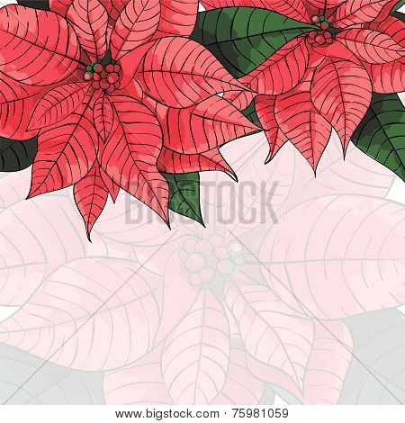 Poinsettia flower background for invitation  card