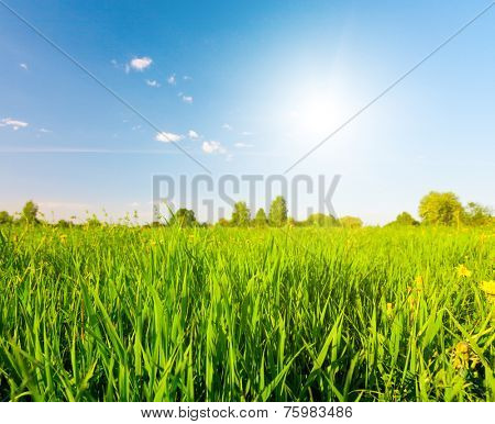 Green field under blue sky with sun