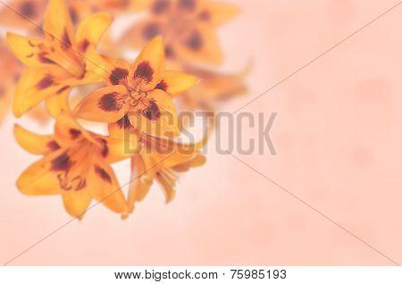 Orange Flowers Lilia