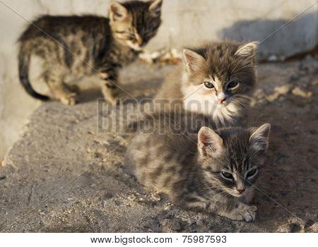 Little Stray Kitten Outdoors