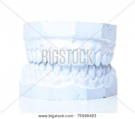 Plaster cast of perfect teeth