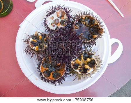Fresh sea urchin.