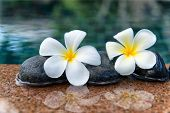 image of plumeria flower  - Two Plumeria Flowers on Row of Stones at Edge of Pool in Peaceful Spa Setting - JPG