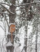 image of nesting box  - Nesting box under snow during the winter - JPG