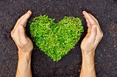 image of environmental conservation  - hands holding green heart shaped tree  - JPG