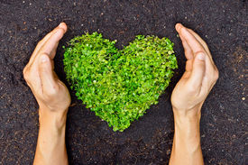 stock photo of save earth  - hands holding green heart shaped tree  - JPG