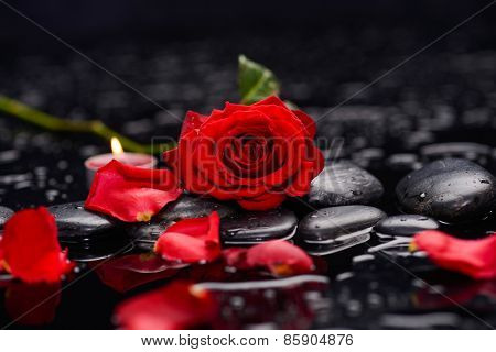 Still life with Red rose ,candle and wet stones