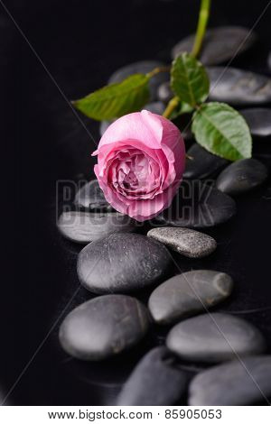 Lying down rose with therapy stones