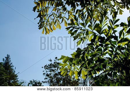 Green Leaf  And Blue Skybackground